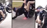 Movie : Lockerer Wheelie auf Harley Davidson